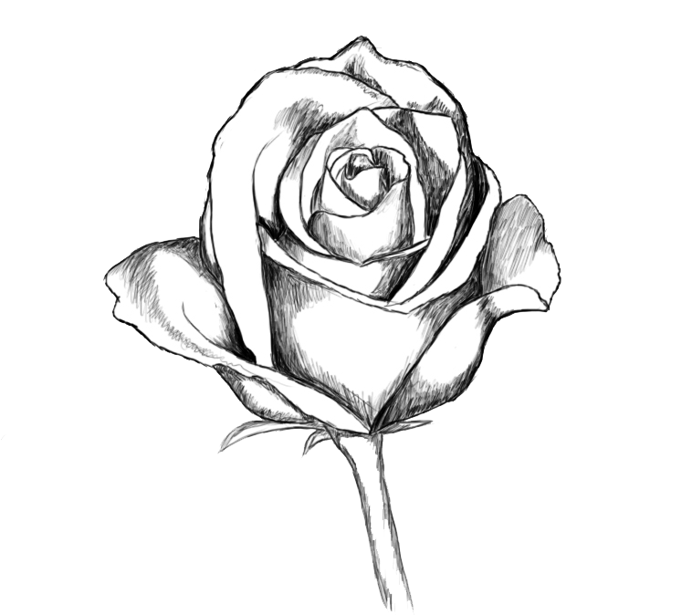 How_To_Draw_Rose